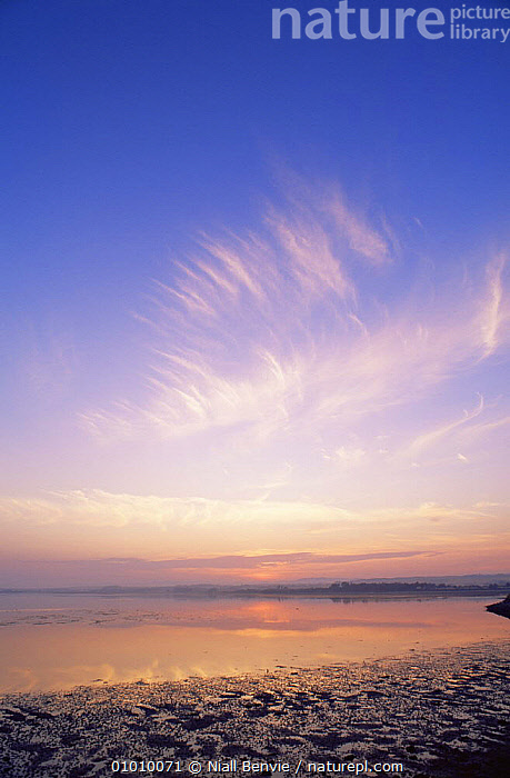 Cirrus clouds during sunset over Montrose Basin, Scotland, UK, CLOUDS,LANDSCAPES,SCOTLAND,SKIES,SUNSET,VERTICAL,WEATHER,Europe, United Kingdom, United Kingdom, United Kingdom, Niall Benvie