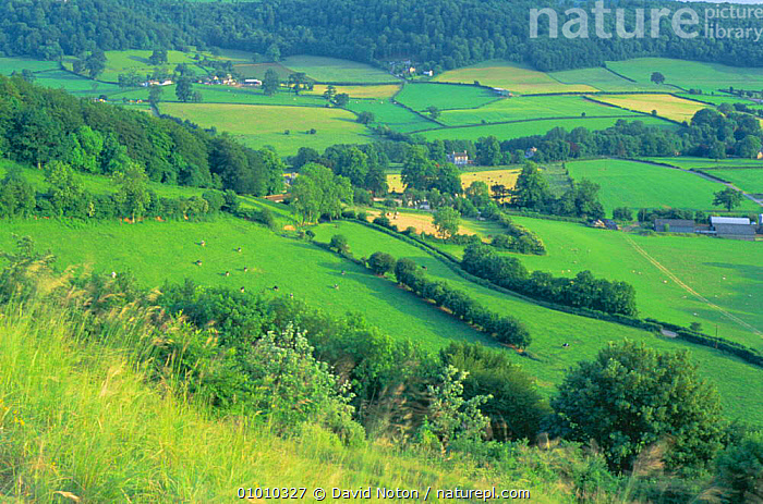 Countryside near Uley, Cotswolds, UK - woodland, hedgerows, patchwork of fields, LANDSCAPES,GLOSCESTERSHIRE,FARMLAND,NR,Europe,ENGLAND, David Noton