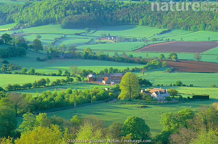 Countryside nr Uley. Cotswolds UK - woodland, hedgerows, Patchwork fields  ,  LANDSCAPES,ULEY,GLOSCESTERSHIRE,FARMLAND,Europe,ENGLAND  ,  David Noton