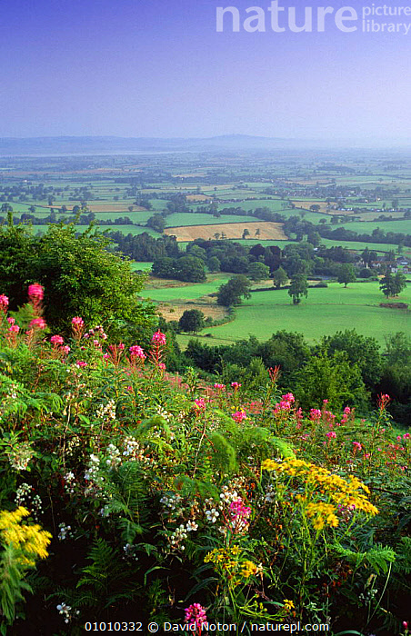 Summer wildflowers on Cam Long Down, Gloucestershire, UK  ,  AGRICULTURE,COUNTRYSIDE,ENGLAND,EUROPE,FARMLAND,HILLSIDE,LANDSCAPES,PEACEFUL,SUMMER,UK,VALLEYS,VERTICAL,WILDFLOWERS,United Kingdom,Concepts,British  ,  David Noton
