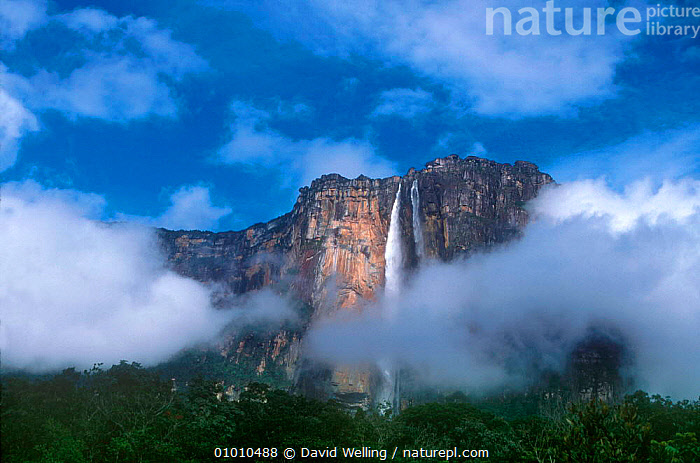 Angel Falls, Canaima NP, Venezuela, South America, ANGEL,CANAIMA,CLOUDS,DW,FALLS,HORIZONTAL,LANDSCAPES,NATIONAL PARK,NP,SOUTH AMERICA,WATER,WATERFALLS,WEATHER,SOUTH-AMERICA, David Welling