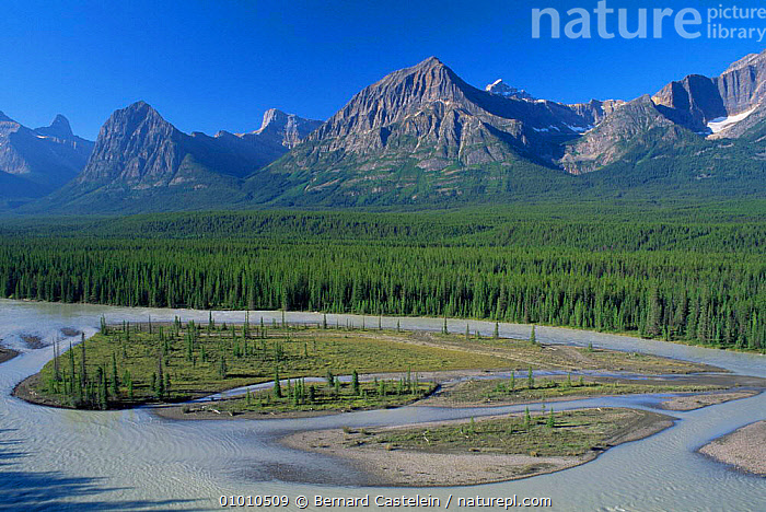 Looking down onto meandering Athabasca River,  Jasper NP, Canada  ,  CANADA,FORESTS,LANDSCAPES,MOUNTAINS,NORTH AMERICA,NP,RIVERS,rockies,Rocky,National Park,,Canadian Rocky Mountain Parks World Heritage Site, UNESCO World Heritage Site,Rocky Mountains,Rockies,NP,Reserve,  ,  Bernard Castelein