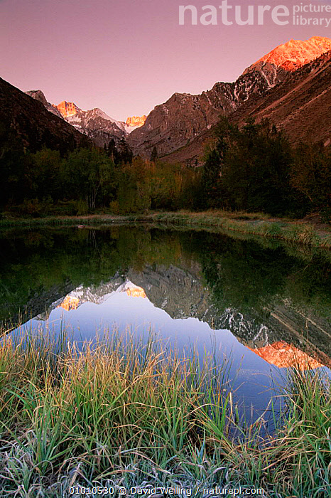 Sunset over Eastern Sierras behind lake, Pallisades Glacier, Eastern Sierra Mountains, California, USA, DAWN,DUSK,HIGHLANDS,LANDSCAPES,MOUNTAINS,NORTH AMERICA,PEACEFUL,REFLECTIONS,SUNRISE,SUNSET,USA,VERTICAL,WATER,Concepts, David Welling