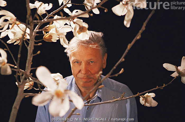 """David Attenborough on location in Japan, with Magnolia grown from 2,000 year-old seed, filming for BBC television series """"Private Life of Plants"""", 1994  ,  FLOWERS,JAPAN,MAGNOLIA,NHU,PEOPLE,PORTRAITS,TREES,Asia,Plants  ,  NEIL NIGHTINGALE"""
