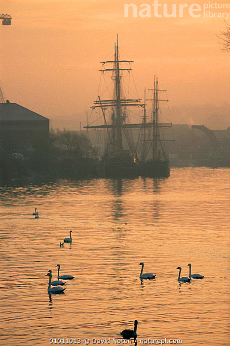 Bristol harbour, SS Great Britain and swans at dawn, Bristol, England  ,  BOATS,CITIES,EUROPE,LANDSCAPES,SWANS,UK,URBAN,VERTICAL,United Kingdom,British, United Kingdom, United Kingdom  ,  David Noton