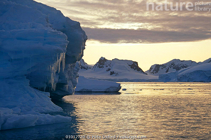 Antarctic scenery, Antarctic Peninsula  ,  ICE,POLAR,SEA,SNOW,SUNSET  ,  Pete Oxford