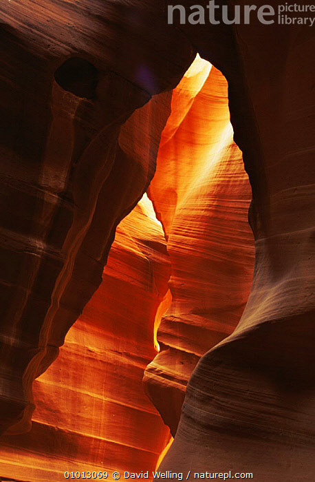 Sandstone formation, Corkscrew Canyon, Arizona, USA.  ,  ABSTRACT,ARTY SHOTS,CLOSE UPS,PATTERNS,ROCK FORMATIONS,ROCKS,USA,VERTICAL,North America,Geology  ,  David Welling