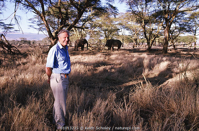David Attenborough and African elephants (Loxodonta africana) on location for BBC Private Life of Plants, Lewa Downs, Kenya, 1993  ,  BBC,EAST AFRICA,ELEPHANTS,FILMING,HABITATS,LANDSCAPES,LIFE OF PLANTS,NHU,PLANTS,PRESENTERS,RESERVE,SAVANNA,WILDLIFE WATCHING,Africa,Grassland  ,  Keith Scholey