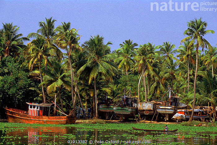 Allepey back waters, Kerala, Southern India  ,  BOAT,PEACEFUL,WATERS,PEOPLE,ALLEPEY,KERALA,BACK,HORIZONTAL,TRADITIONAL,CONCEPTS,INDIAN-SUBCONTINENT  ,  Pete Oxford