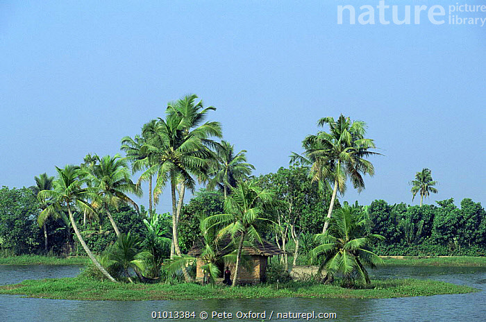 Allepey back waters, hut on an Island with palm trees, Kerala, Southern India.  ,  ASIA,INDIAN SUBCONTINENT,PEACEFUL,PEOPLE,TRADITIONAL,TREES,TROPICAL,WETLANDS,Concepts,Plants,INDIAN-SUBCONTINENT  ,  Pete Oxford