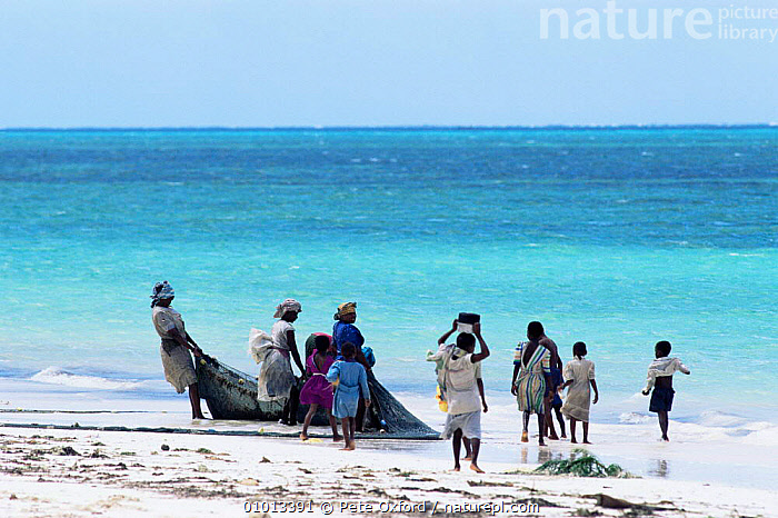Women pulling in fishing nets off the east coast of Zanzibar Island, Tanzania  ,  BEACHES,CHILDREN,COASTS,EAST AFRICA,FAMILIES,INDIAN OCEAN,PEOPLE,TRADITIONAL,Africa,Marine,EAST-AFRICA  ,  Pete Oxford