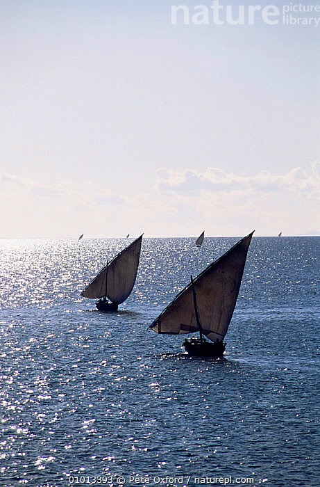 Fishing dhows off Zanzibar Island, Tanzania. Africa.  ,  AFRICA,BOATS,COASTS,EAST AFRICA,INDIAN OCEAN,sailing,sea,TRADITIONAL,two,VERTICAL,Marine,EAST-AFRICA  ,  Pete Oxford