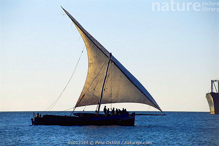 Traditional fishing dhow in full sail off Zanzibar Island, Tanzania, Africa.  ,  AFRICA,BOATS,EAST AFRICA,INDIAN OCEAN,PEOPLE,sailing,Marine,EAST-AFRICA  ,  Pete Oxford