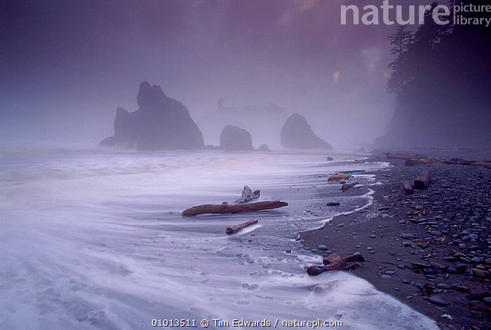 Ruby Beach in stormy conditions, July 1995. Olympic NP, Washington, USA  ,  OLYMPIC,BEACH,BEACHES,ROCK FORMATIONS,SKY,ATMOSPHERIC,COASTAL,SEA,HORIZONTAL,STORMS,OUTSTANDING,1995,JULY,NP,RUBY,WEATHER,GEOLOGY,NATIONAL PARK,North America,USA  ,  Tim Edwards