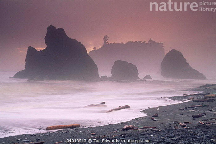 Ruby Beach in stormy conditions at sunset, Olympic NP, Washington State, USA  ,  ATMOSPHERIC,BEACHES,coastal waters,coastline,COASTS,driftwood,DUSK,Islands,LANDSCAPES,MARINE,MIST,NORTH AMERICA,NP,RESERVE,ROCK FORMATIONS,sea,shoreline,SUNSET,USA,Geology,National Park,WEATHER  ,  Tim Edwards