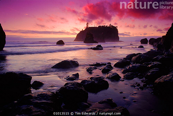 Ruby Beach at sunset. Olympic NP, Washington, USA  ,  HORIZONTAL,NP,ROCK FORMATIONS,RUBY,ATMOSPHERIC,SEA,BEACHES,COASTAL,COLOURFUL,SUNSET,SILHOUETTES,BEACH,OLYMPIC,PINK,REFLECTIONS,PEACEFUL,CONCEPTS,GEOLOGY,NATIONAL PARK,North America,USA  ,  Tim Edwards
