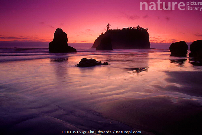 Ruby Beach at sunset. Olympic NP, Washington, USA  ,  ATMOSPHERIC,BEACH,BEACHES,COASTS,DUSK,NP,OLYMPIC,PEACEFUL,PINK,REFLECTIONS,ROCK FORMATIONS,RUBY,SEA,SILHOUETTES,SUNSET,CONCEPTS,GEOLOGY,NATIONAL PARK,North America,USA  ,  Tim Edwards