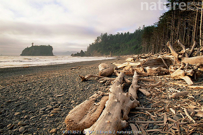 Drift wood on Ruby Beach after storm, Olympic NP, Washington State, USA  ,  BEACHES,coastal waters,COASTS,debris,driftwood,Islands,LANDSCAPES,MARINE,NORTH AMERICA,NP,RESERVE,shoreline,STORMS,USA,Wood,Weather,National Park  ,  Tim Edwards