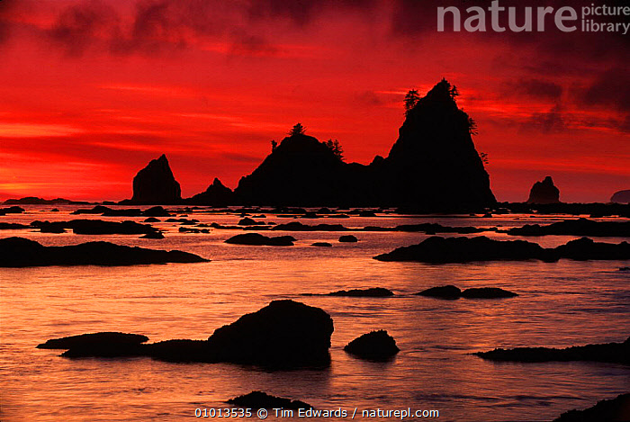 Olympic NP at sunset. Washington, USA  ,  COAST,SUNSET,REFLECTIONS,ATMOSPHERIC,BEACHES,OLYMPIC,SILHOUETTES,ARTY SHOTS,HORIZONTAL,NP,ROCK FORMATIONS,SEA,SKY,GEOLOGY,NATIONAL PARK,North America,USA  ,  Tim Edwards