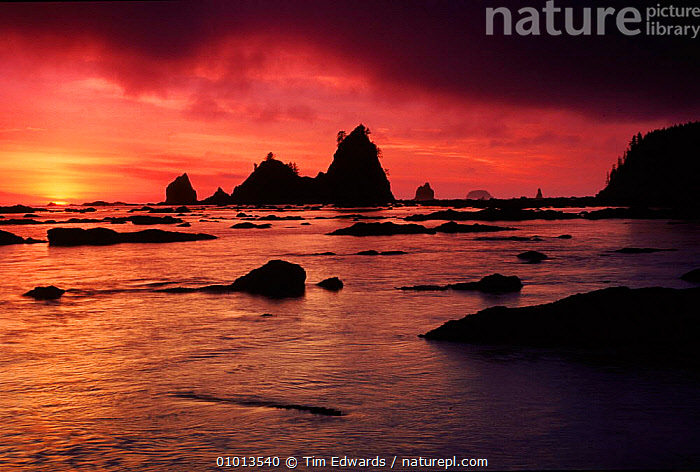Olympic NP at sunset. Washington, USA  ,  COAST,HORIZONTAL,SEA,SKY,OUTSTANDING,ARTY SHOTS,REFLECTIONS,SILHOUETTES,BEACHES,NP,ROCK FORMATIONS,ATMOSPHERIC,OLYMPIC,SUNSET,GEOLOGY,NATIONAL PARK,North America,USA  ,  Tim Edwards