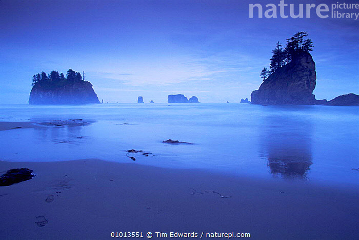 Second beach at dusk, Olympic NP, Washington State, USA. UNESCO World Heritage Site.  ,  ATMOSPHERIC,BEACHES,BLUE,coastal waters,COASTS,DUSK,Islands,MARINE,MIST,NORTH AMERICA,NP,PEACEFUL,RESERVE,ROCK FORMATIONS,sea,shoreline,SUNSET,USA,Concepts,Geology,National Park,WEATHER  ,  Tim Edwards