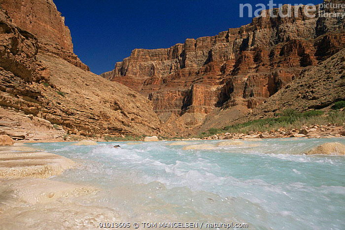 Little Colorado river flowing through Grand Canyon, Arizona, USA  ,  CANYONS,LANDSCAPES,LITTLE,NORTH AMERICA,RIVERS,ROCK FORMATIONS,USA,Geology  ,  TOM MANGELSEN