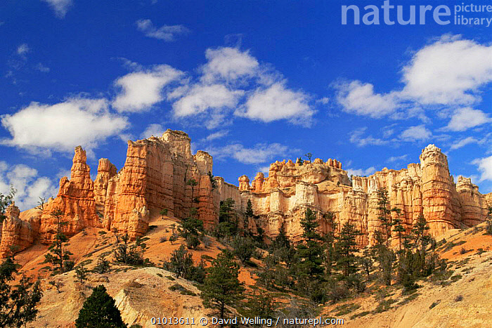 Mossy Cave formation with Hoodoos (pillars of rock) Bryce Canyon NP, Utah, USA  ,  CLIFFS,DESERTS,hoodoo,LANDSCAPES,NORTH AMERICA,NP,ROCK FORMATIONS,sandstone,USA,Geology,National Park  ,  David Welling