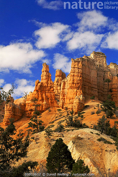 Mossy Cave formation with Hoodoos (pillars of rock) Bryce Canyon NP, Utah, USA  ,  CLIFFS,DESERTS,hoodoo,LANDSCAPES,NORTH AMERICA,NP,ROCK FORMATIONS,sandstone,USA,VERTICAL,Geology,National Park  ,  David Welling