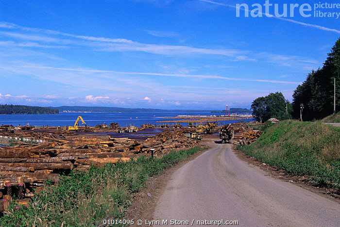 Coastal Sawmill industry, Vancouver Island, British Columbia, Canada  ,  CANADA,COASTAL WATERS,DEFORESTATION,FORESTRY,INDUSTRY,LANDSCAPES,LOGGING,MACHINERY,NORTH AMERICA,TREES,TRUNKS,VEHICLES,Plants  ,  Lynn M Stone