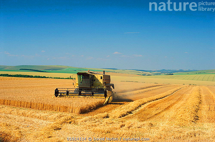 Harvesting cereal crop on Salisbury Plain, Wiltshire  ,  AGRICULTURE,ARABLE,BRITISH,CEREAL,CEREALS,COMBINE,CROPS,CULTIVATED,DNO,EUROPE,FARMLAND,HARVEST,HARVESTER,MACHINERY,SUMMER,UK,UNITED KINGDOM,VEHICLES,ENGLAND  ,  David Noton
