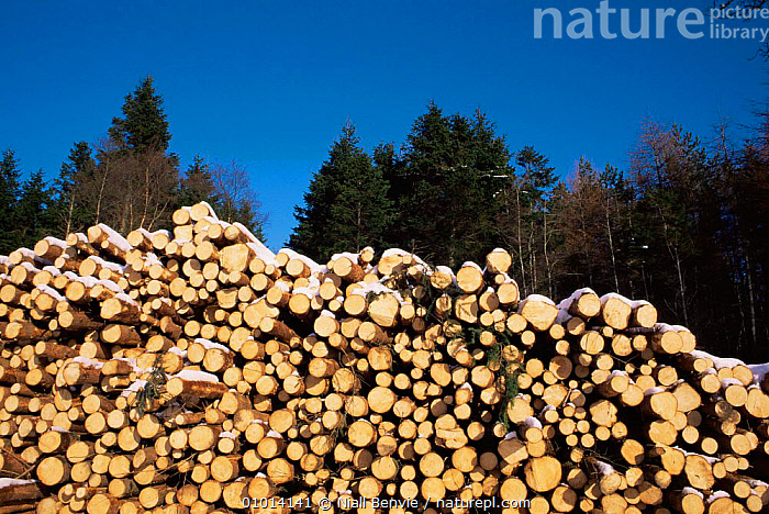 Stack of cut timber to collect Glen Prosen, Scotland  ,  CONSERVATION,EUROPE,FORESTRY,SCOTLAND,TRUNKS,UK,United Kingdom,British  ,  Niall Benvie