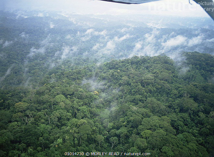 Aerial view of Amazon rainforest, Ecuador  ,  AERIALS,AMAZONIA,CANOPY,LANDSCAPES,SOUTH AMERICA,TROPICAL RAINFOREST  ,  MORLEY READ