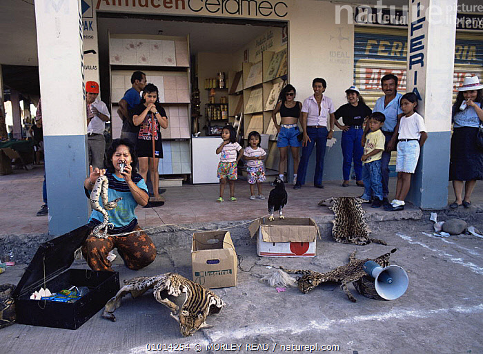 Jungle remedies and animal parts for sale, Lago Agrio (oil town), Ecuador  ,  CATS,MAMMALS,MARKET,PEOPLE,REPTILES,SKINS,SOUTH AMERICA,TRADE,TRADITIONAL,WILDLIFE TRADE  ,  MORLEY READ
