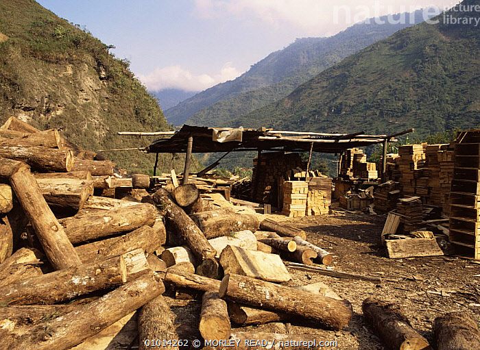 Timber from rainforest, used to make wooden boxes, Ecuador  ,  AMAZONIA,DEFORESTATION,FORESTRY,INDUSTRY,LOGS,SOUTH AMERICA,TROPICAL RAINFOREST  ,  MORLEY READ
