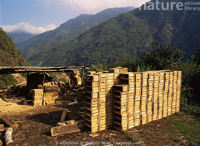 Wooden boxes made from timber from rainforest. Ecuador  ,  AMAZONIA,DEFORESTATION,FORESTRY,INDUSTRY,LANDSCAPES,SOUTH AMERICA,TROPICAL RAINFOREST  ,  MORLEY READ