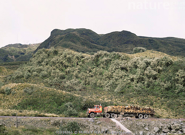 Truck transporting timber from the rainforest across the Andes to Quito, Ecuador.  ,  DEFORESTATION,FORESTRY,LOGS,MACHINERY,ROADS,SOUTH AMERICA,TRANSPORT,TROPICAL RAINFOREST,VEHICLES  ,  MORLEY READ