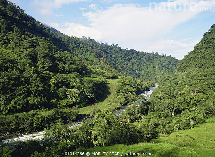 Route of buried oil pipe beside stream through the foothills of the Andes, Ecuador  ,  CRUDE OIL,LANDSCAPES,RIVERS,SOUTH AMERICA,TROPICAL RAINFOREST  ,  MORLEY READ