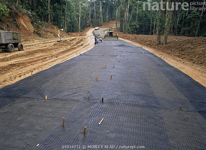 Geotextyle laid down in road building for oil exploration in rainforest,  Ecuador  ,  DEFORESTATION,LANDSCAPES,ROADS,SOUTH AMERICA,TROPICAL RAINFOREST  ,  MORLEY READ