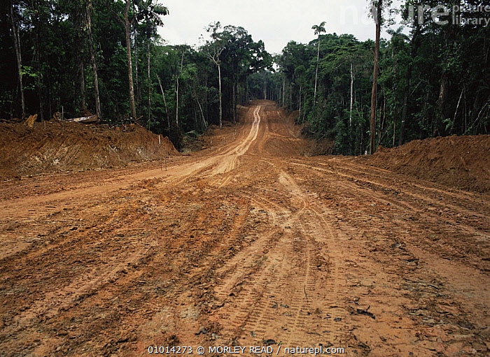 Road building for oil exploration in rainforest, Ecuador  ,  DEFORESTATION,LANDSCAPES,ROADS,SOUTH AMERICA,TROPICAL RAINFOREST  ,  MORLEY READ