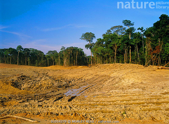 Rainforest clearance for oil facility. Ecuador, South America  ,  DEFORESTATION,CRUDE OIL,TROPICAL RAINFOREST,FACILITY,FORESTRY,LANDSCAPES  ,  MORLEY READ