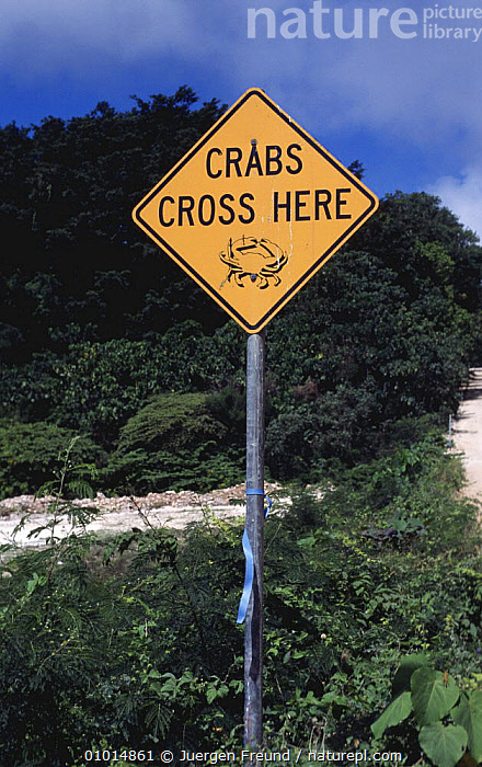 """Sign """"Crabs Cross Here"""" Christmas Island Red Crabs (Gecarcoidea natalis) Migration  ,  ARTHROPODS,CONSERVATION,CRABS,CRUSTACEANS,INTERESTING,INVERTEBRATES,LAND CRABS,LANDSCAPES,PEOPLE,RED,ROADS,TRAFFIC,VEHICLES  ,  Jurgen Freund"""