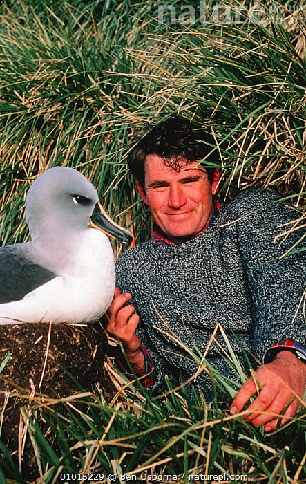 Alastair Fothergill and Grey headed albatross (Thalassarche chrysostoma) on location for BBC Life in the Freezer, 1993  ,  ALBATROSSES,BBC,BIRDS,FILMING,Life in the Freezer,MARINE,MIXED SPECIES,nesting,NESTS,NHU,PEOPLE,POLAR,PORTRAITS,presenters,SEABIRDS,VERTICAL  ,  Ben Osborne