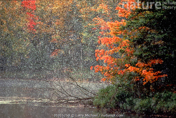 Early snow in autumn. Michigan, USA  ,  ATMOSPHERIC,HORIZONTAL,OUTSTANDING,AUTUMN,TREES,SNOW,EARLY,WATER,RIVERS,COLOURFUL,PLANTS,USA,North America  ,  Larry Michael