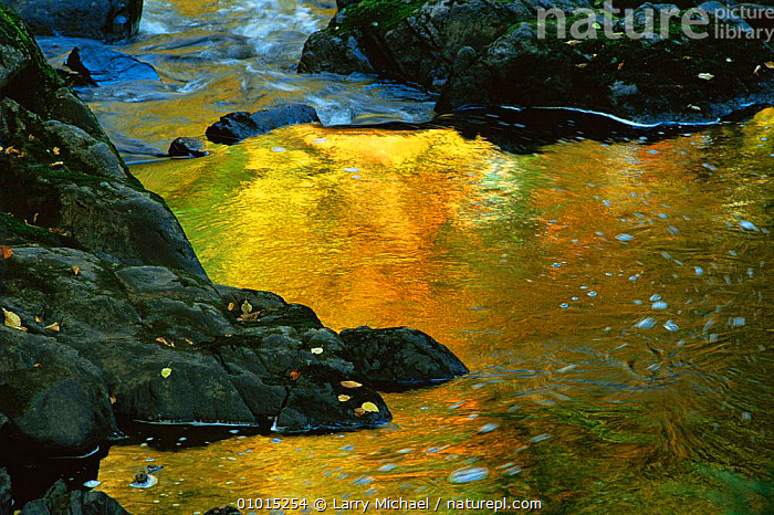 Autumn tree colours reflected in river, Michigan, USA  ,  ARTY SHOTS,AUTUMN,NORTH AMERICA,PATTERNS,RIVERS,USA,WATER , LANDSCAPES  ,  Larry Michael