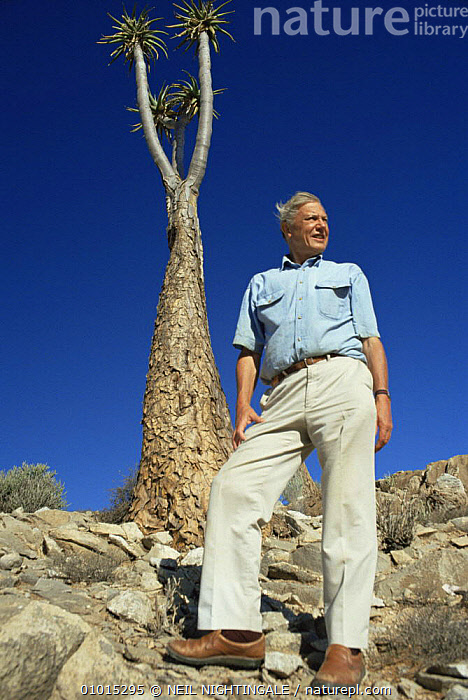 David Attenborough beside to Giant aloe (Aloe pillansii) South Africa, on location for BBC series Private Life of Plants, 1993  ,  AFRICA,BBC,NHU,PEOPLE,PLANTS,PORTRAITS,Private life of Plants,SOUTHERN AFRICA,VERTICAL  ,  NEIL NIGHTINGALE