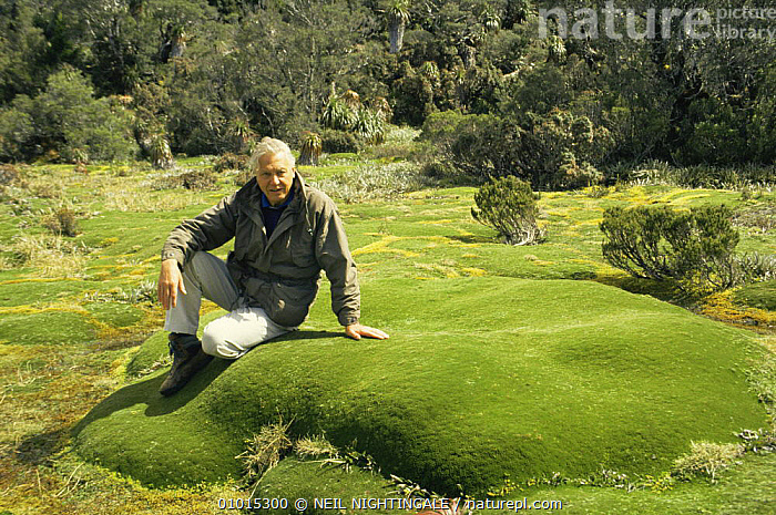"Sir David Attenborough sitting on Giant Cushion plant. Mt. Ann Tasmania, on location for ""Private Life of Plants"" 1993  ,  AUSTRALIA,NHU,PEOPLE,PLANTS,PORTRAITS  ,  NEIL NIGHTINGALE"