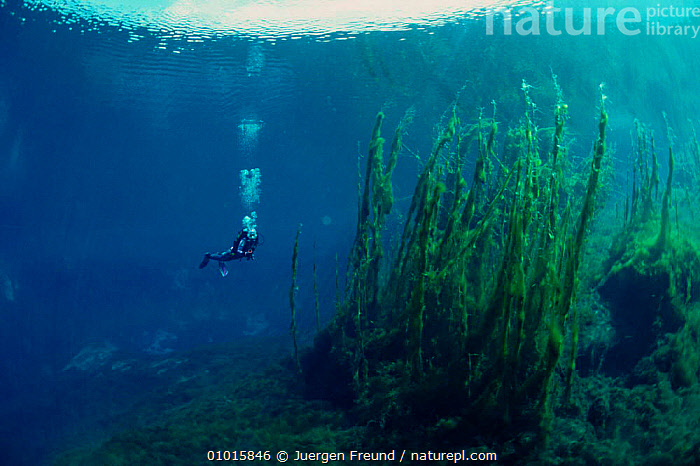 Diver in crystal clear lake with algae growing from bottom. Italy, Europe  ,  ALGAE,DIVER,EUROPE,FRESHWATER,HORIZONTAL,ITALY,LAKES,PEOPLE,PLANTS,PURSUITS,UNDERWATER,WATER  ,  Jurgen Freund