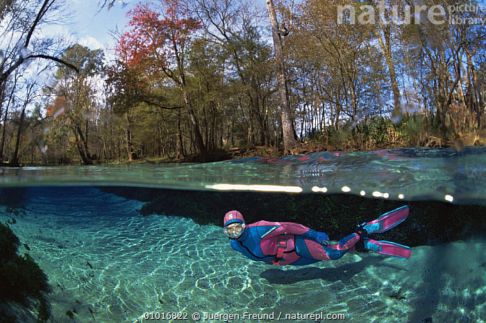 Person snorkeling in very clear freshwater pond, Florida, USA.  ,  DIVING,FRESHWATER,LEISURE,PEOPLE,SPLIT LEVEL,UNDERWATER,USA,WATER PURSUITS,North America  ,  Jurgen Freund