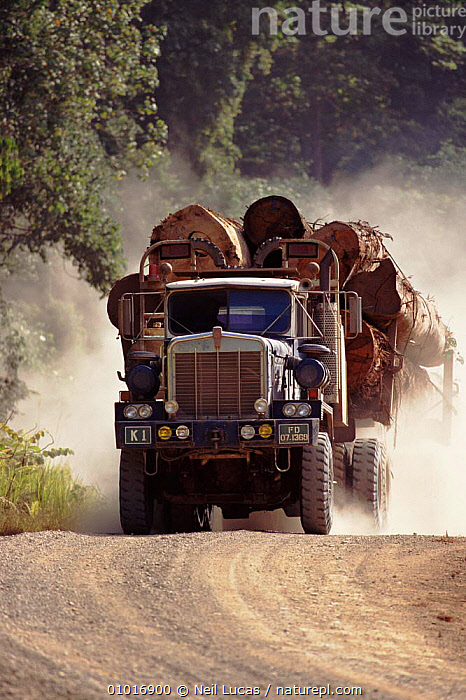 Lorry transporting timber logged from primary rainforest, Sabah, Borneo, Malaysia, ASIA,DEFORESTATION,FORESTRY,LORRY,NL,PRIMARY,RAINFOREST,ROADS,SABAH,SOUTH EAST ASIA,TIMBER,TROPICAL RAINFOREST,VEHICLES,VERTICAL,SOUTH-EAST-ASIA, Neil Lucas