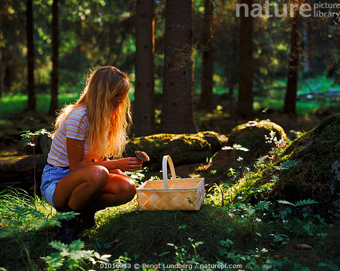 Girl hunting for fungi in a woodland in Sweden, Scandinavia, Europe  ,  ATMOSPHERIC, HOLIDAYS, LEISURE, PEACEFUL, PLANTS, TREES, EDIBLE, EUROPE, FUNGI, HORIZONTAL, PEOPLE, PORTRAITS, SCANDINAVIA, SUMMER,Concepts  ,  Bengt Lundberg